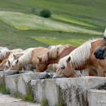 Piano Grande Horses