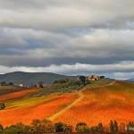 Purgatorio Vineyard